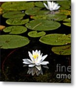 Lovely Pond Lily Metal Print