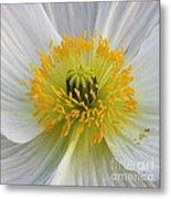 Lovely White Flower Square Metal Print