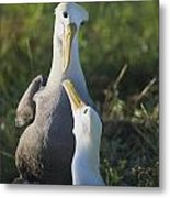 Lovers Gaze At Each Other Metal Print