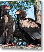 Lovers Quarel Metal Print by David Yack