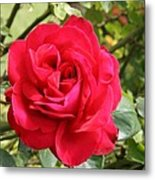 Lovely Red Rose Metal Print