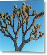 Low Angle View Of Joshua Tree, Joshua Metal Print