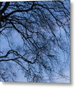 Low Angle View Of Tree At Dawn, Dark Metal Print