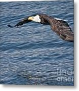 Low Flying Metal Print