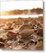 Low Tide 2 Metal Print