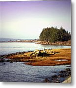 Low Tide Revelations Metal Print