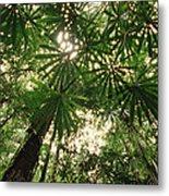 Lowland Tropical Rainforest Fan Palms Metal Print