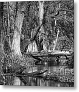 Loxahatchee Black And White Metal Print
