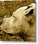Loyalty And Strength Metal Print by Q's House of Art ArtandFinePhotography