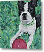 Lucy With Ball In Grass Metal Print