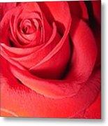 Luminous Red Rose 6 Metal Print