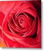 Luminous Red Rose 7 Metal Print
