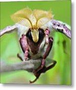 Luna Moth Metal Print by Candice Trimble