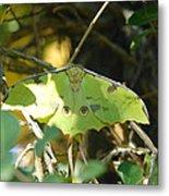 Luna Moth In The Sun Metal Print