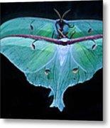 Luna Moth Mirrored Metal Print