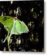 Luna Moth On Tree Metal Print