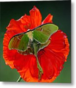 Luna Moth Orange Poppy Green Bg Metal Print