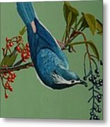 Lunch Time For Blue Bird Metal Print