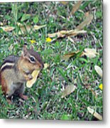 Lunch Time Photo A Metal Print