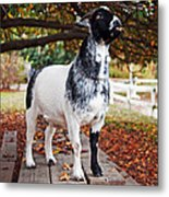 Lunch With Goat Metal Print