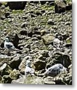 Lunch With The Gulls Metal Print