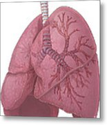 Lungs And Bronchi Metal Print