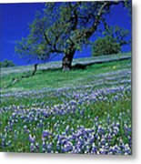Lupine And The Leaning Tree Metal Print