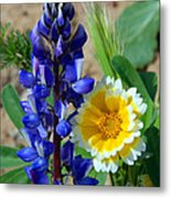 Lupine And Tidy Tip Metal Print