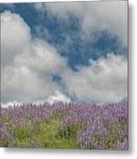 Lupine Field Under Clouds Metal Print
