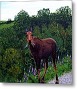 Lupine Loving Moose Metal Print