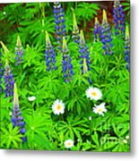 Lupines And Daisies 11 Metal Print