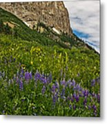 Lupines On The Hillside Metal Print