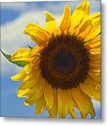 Lus Na Greine - Sunflower On Blue Sky Metal Print