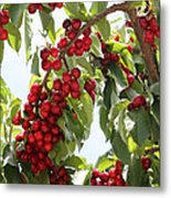 Luscious Cherries Metal Print