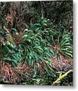 Lush Ferns Of The Forest Metal Print