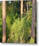 Lush Forest Metal Print