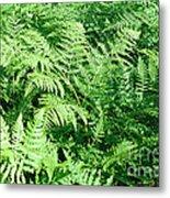 Lush Green Fern Metal Print