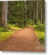Lush Green Forest At Cheakamus Metal Print