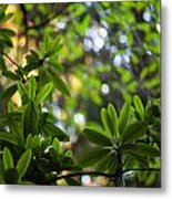 Lush Rhododendron Forest Metal Print
