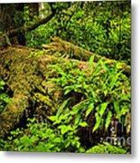 Lush Temperate Rainforest Metal Print