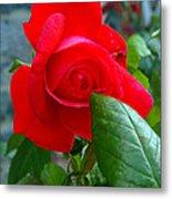 Luss Rose Metal Print