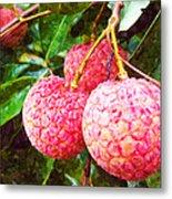 Lychee Fruit  Metal Print