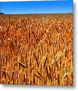 Lying In The Rye Metal Print by Karen Wiles