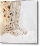 Lynx Feet Metal Print
