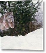 Lynx Leaping Metal Print