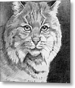 Lynx Metal Print by Suzanne Schaefer