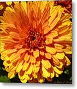 M Bright Orange Flowers Collection No. Bof7 Metal Print