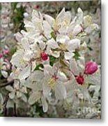 M White Flowers Collection No. W11 Metal Print