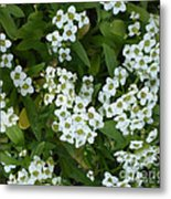 M White Flowers Collection No. W6 Metal Print