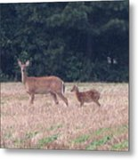 Mable The Female Deer With Harriet The Baby Fawn Metal Print